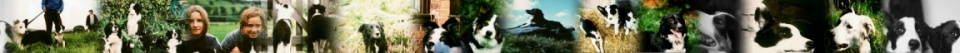 Border Collie Rescue website banner
